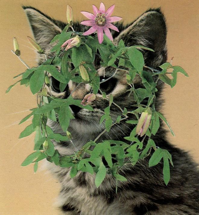 purpleflower.tiff